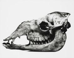 interesting skull.