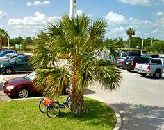 Fort Myers Florida, Sidewalk, Plants, Sidewalks, Plant, Pavement, Walkways, Planting, Planets