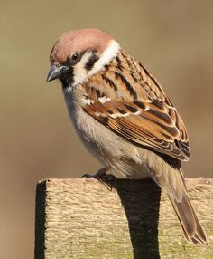 Sparrow - God knows the beauty inside me.  He loves me even though I do not have the outside beauty of the other birds.