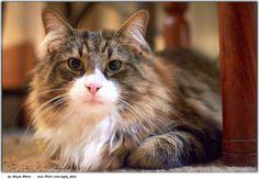 A wonderful animal portrait ~ The Cuteness Buddy