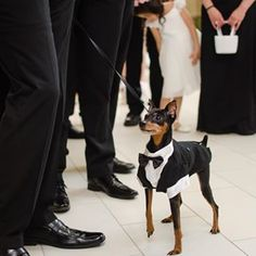 """Ready for anything, dad! Just point me toward the aisle!"" 