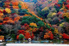 Los mejores sitios para disfrutar del momiji o koyo (el cambio de color de las hojas de los árboles) en Japón