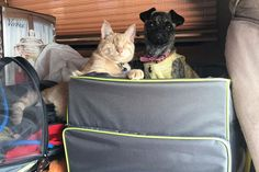 Disabled Dog and Blind Cat Form Precious Friendship