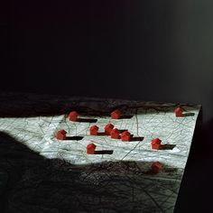 "Lucie Foundation | Alexandra Serrano ""Nesting in the Wolf Tree"""