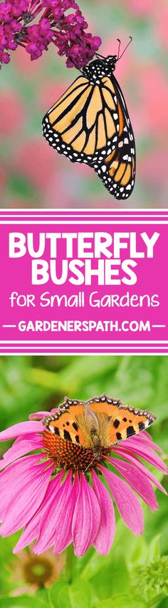 Trying to attract more butterflies to your backyard? Read our suggested 6 options to learn how to experience the beautiful presence of these winged wonders. http://gardenerspath.com/how-to/animals-and-wildlife/butterfly-bushes-small-gardens/