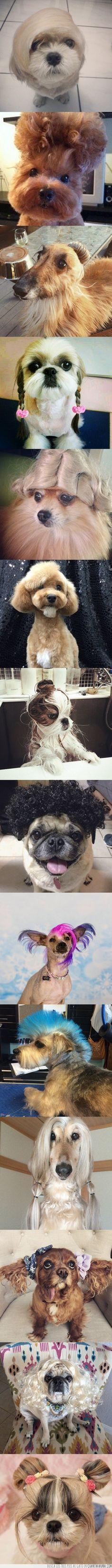 Perros a los que les sobra el estilo de peluquería