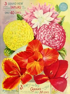 Maule's silver anniversary seed catalogue : 1902