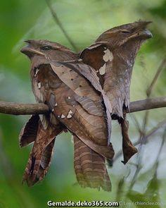 Großartige Jene Vögel nach sich ziehen sich an ihre Umgebung individuell und sehen aus wie Blätter! B ...  #blatter #individuell #sehen #umgebung #vogel #ziehen