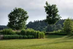 Zahrada zvlněná | Atelier Flera Boxwood Garden, Golf Courses, Country Roads, River, Outdoor, Atelier, Outdoors, Outdoor Games, The Great Outdoors