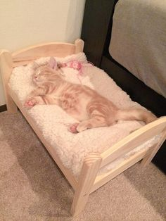 sleepy cat has its own bed