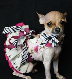 Ella Bea's Collection - Dog Dresses, Pet Apparel, Designer Dresses..Ella Bea is a rescued chi..lucky little dog