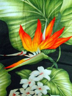 Royal Creations Mens Hawaiian Shirt Bird of Paradise Plumaria Flowers Hawaiian Wear, Mens Hawaiian Shirts, Exotic Flowers, Beautiful Flowers, Exotic Art, Paradise, Delicate, Bird, Plants