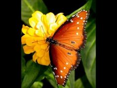 Live Life Like a Butterfly. Vibrant ly Vibrant : Pulsating with life , vigor or activity. My Positive Affirmation : I Live my Li. Butterfly Pupa, Butterfly Kisses, Orange Butterfly, Butterfly Makeup, Wayne Dyer, Gods Creation, Beautiful Butterflies, Beautiful Flowers, Word Of God