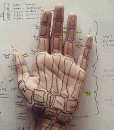 hand bones, huesos mano