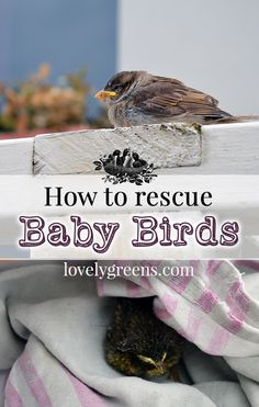 What to do if you've found an abandoned or injured baby bird