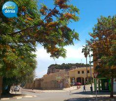 Grevilleas en las murallas de Dénia http://www.hellodenia.com/