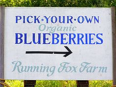 15 Recommendations for Place to PYO Blueberries in Western MA