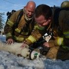 Cola is alive and safe thanks to the work of Lima firefighters and a newly donated dog oxygen mask. When Cola was brought out of the fire she looked lifeless, but after firefighters spent five minutes trying to revive the dog with the new oxygen mask she was breathing once again.