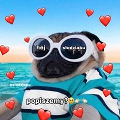 Polish Memes, Wholesome Memes, Reaction Pictures, Cute Pictures, Bff, Haha, Humor, My Boys, Funny