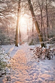 Frosted Light - Winter Woodland, photo by Jack Hood. I Love Winter, Winter Snow, Winter Time, Winter Christmas, Winter Magic, Photos Voyages, Winter Scenery, All Nature, Snow Scenes