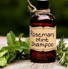 Homemade Rosemary Mint Shampoo. 6 oz Aloe Vera Gel, 3 T Olive Oil, 10 T Baking Soda, 20 drops Rosemary Oil, 10 drops Peppermint Oil, BPA free plastic dispenser bottles.