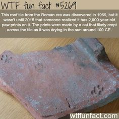 Roof tile from roman era has cat paws on it - WTF fun facts Wtf Fun Facts, Funny Facts, Random Facts, Crazy Facts, True Facts, Interesting Information, Interesting History, Interesting Facts, The More You Know