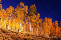 "20 fascinating things you didn't know about Utah - Matador Network ""Photo: J Zapell Spread over 106 acres, Pando (aka The Trembling Giant) is a male quaking aspen tree that comprises an entire forest. It's believed that the tree is 80,000 years old, although there are other theories that place it closer to a million years old"""