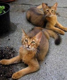 Piccatso! - Click to see loads of great pictures of cats and kittens to brighten your day.