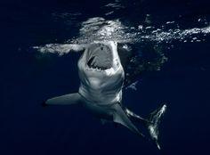 Shark 4k Wallpaper 3840x2160