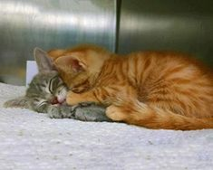 overwhelming cuteness