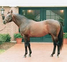 Fappiano(1977)(Colt)Mr Prospector- Killaloe By Dr Fager. 5x5 To Bull Dog. 17 Starts 10 Wins 3 Seconds 1 Third. $370,213. Won Metropolitan H(G1), Forego H(G2), Discovery H(G3), Morven H. Died In 1990.