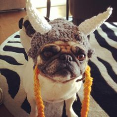 Photo of Jade courtesy of Alysha Perisho in Queen Anne!  Find more cute pet photo submissions on our Pet-O-Ween board!