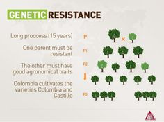 Genetic Resistance Long Process (15 Years)