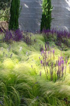 Dry Garden, Gravel Garden, Winter Garden, Garden Grass, Ornamental Grass Landscape, Ornamental Grasses, Landscape Grasses, Mexican Feather Grass, Mediterranean Garden Design