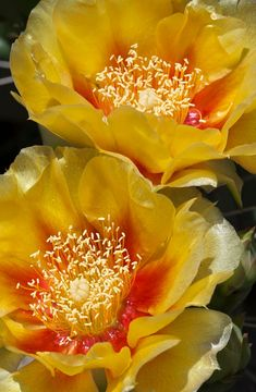 Prickly pear by Jane L on 500px