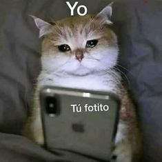 Meme Faces, Funny Faces, Memes Amor, Memes Lindos, Funny Spanish Memes, Cute Love Memes, Love Phrases, Wholesome Memes, Mood Pics