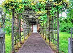 Building A Grape Arbor In Your Garden: Build Your Own Grape Arbor