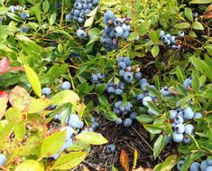 Tratament de combatere Paduchele din San Jose - generatia de iarna Plant
