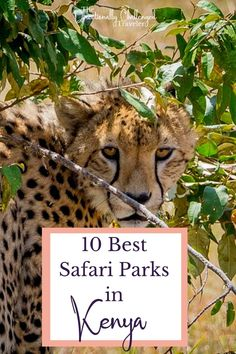 Planning a safari to Kenya and not sure where to go? Here are 10 incredible safari parks to spot the big 5, go bird watching, and more! Kenya Travel, Big 5, Worldwide Travel, Bird Watching, Where To Go, Places To See, Travel Inspiration, Parks, Safari