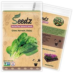 CERTIFIED ORGANIC SEEDS Appr 225  Butterflay Spinach  Spinach Seeds Heirloom Pack  Non GMO Non Hybrid  USA *** Continue to the product at the image link. (This is an affiliate link) #GardeningVegetablePlantsandSeeds