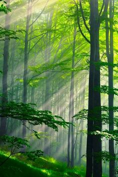Permite que la luz alcance hasta el último rincón de tu ser. (Karluna)