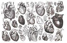 multi-hearts