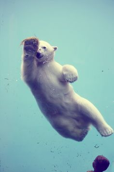 Favorite Animal - polar bear