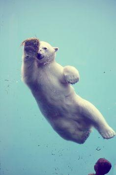 Favorite Animal - polar bear