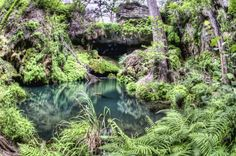 Westcave Preserve in SW Austin