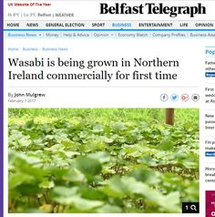 Wasabi News covers all activities related to the production of wasabi in Northern Ireland. Watch Companies, Company Profile, Belfast, Business News, Northern Ireland, Herbs, Life, Northern Ireland County, Herb