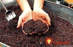 Kvalitné hnojivá z katalógov, predajní a eshopov rozhodne nie sú lacná záležitosť a dokážu byť poriadnou záťažou pre domáci rozpočet.    Prinášame vám recept na hnojivo, ktoré je veľmi účinné a lacné a vyrobíte si ho vlastnoručne