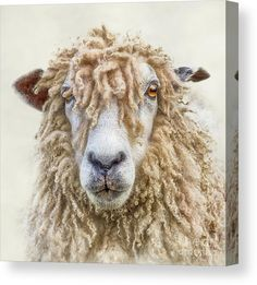 Longwool Sheep Art Print by Linsey Williams Wall Art, Clothing, And - X-Small Farm Animals, Animals And Pets, Cute Animals, Beautiful Creatures, Animals Beautiful, Sheep Face, Afrique Art, Photo Animaliere, Sheep And Lamb
