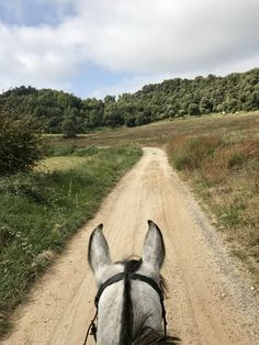 Horse Ears, Happy Trails, Draft Horses, Horse Pictures, Horseback Riding, Horse Riding, Beautiful Horses, Nice View, Equestrian