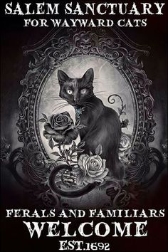 I Love Cats, Cute Cats, Funny Cats, Crazy Cat Lady, Crazy Cats, Black Cat Art, Black Cats, Acevedo, Welcome Poster